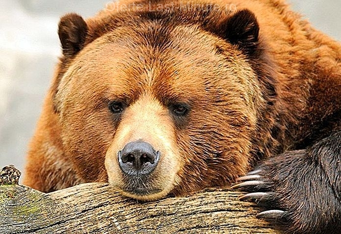 Gradina Zoologica din Alaska