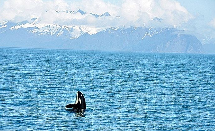 Parcul Național Kenai Fjords