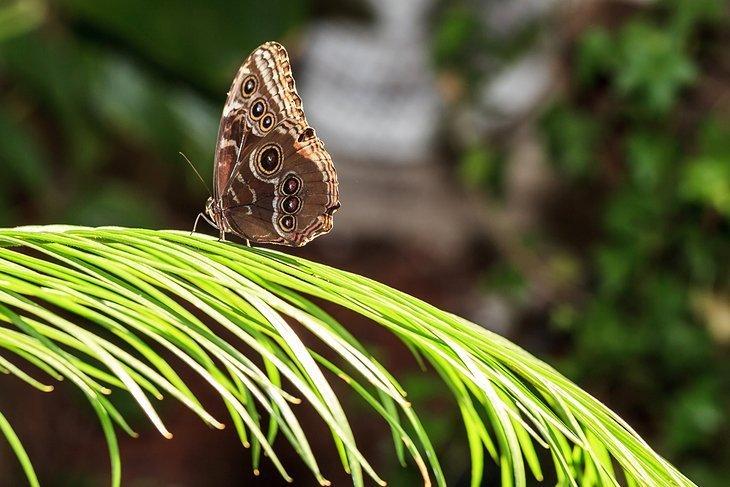 Savurați o pauză naturală în Dubai Butterfly Garden