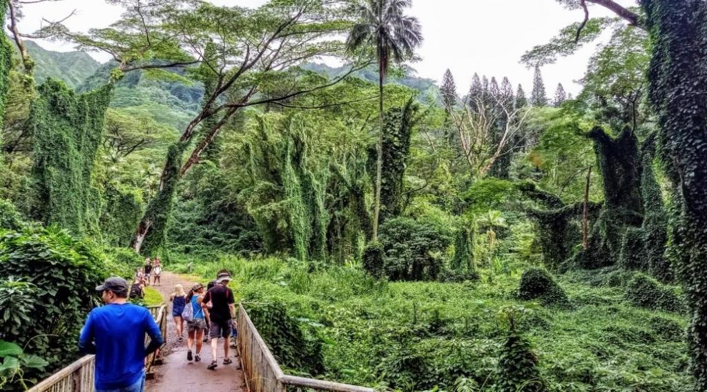 Lyon Arboretum și Manoa Falls