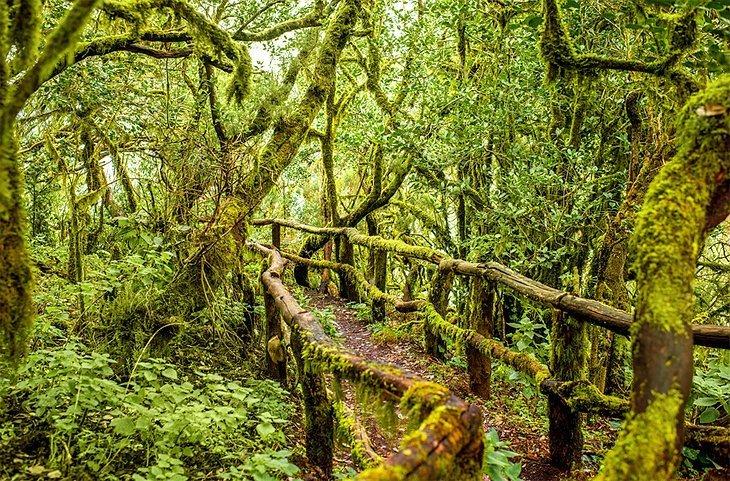 Parcul Nacional de Garajonay, La Gomera