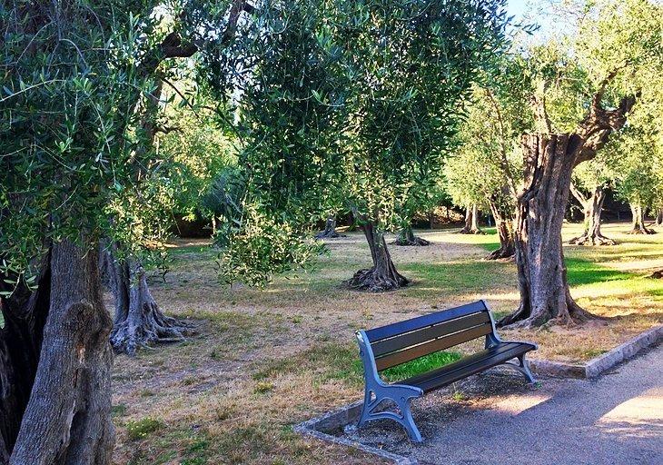 Parc des Arenes de Cimiez