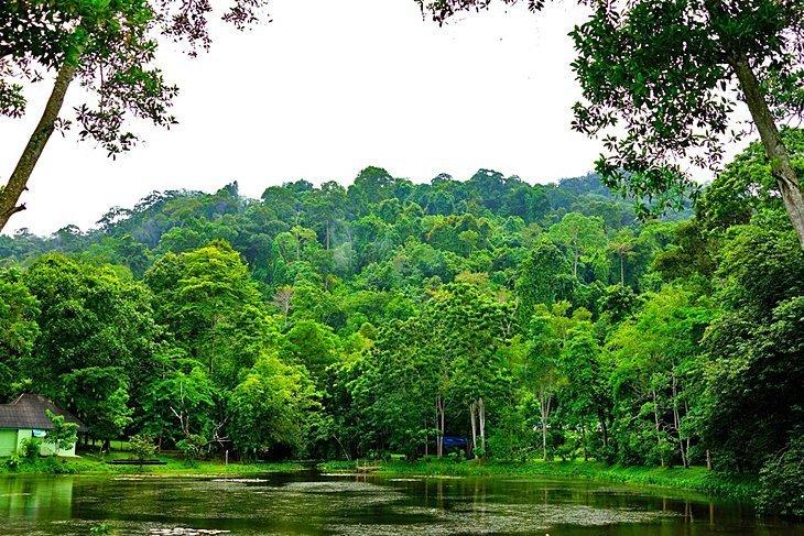 Centrul de reabilitare Gibbon și cascada Bang Pae