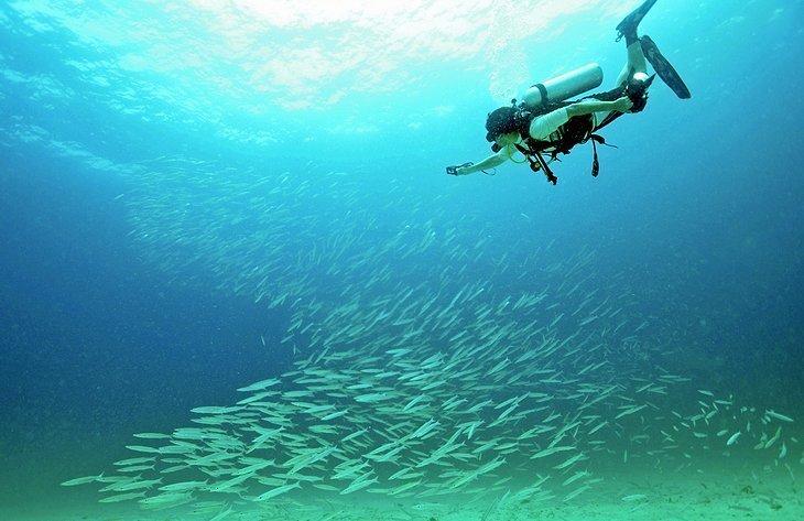 Scufundari si snorkeling