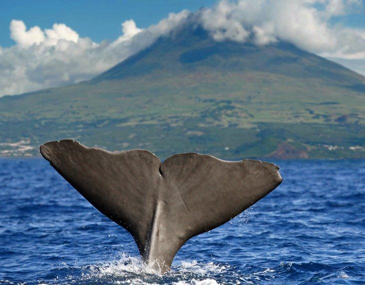 Tururi de vizitare a delfinilor și balenelor